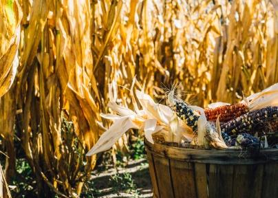 fall-food